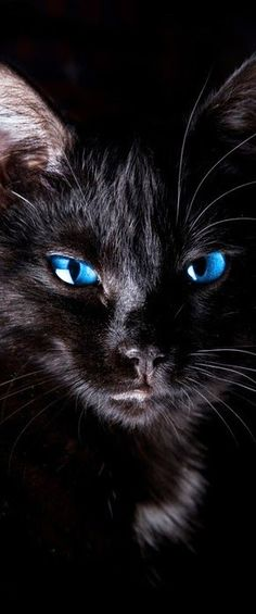 """The beautiful black cat with striking blue eyes. This reminds me of """"Ziggy"""" who sadly passed away 3/3/15."""
