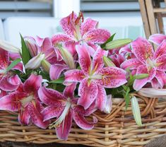 Stargazer lilies outsell every other lily on the market. Learn why they are so popular with growers, floral designers and home gardeners. Clematis Care, Stargazing, Floral Design, Lily, Table Decorations, Flowers, Plants, Garden, Home Decor