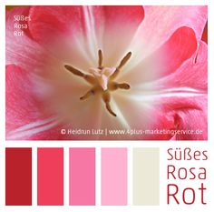 Farbpalette Rosa-Rot - Sweet Pink