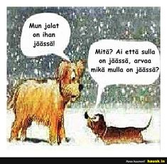 Funny christmas photos humor thoughts 29 Ideas for 2019 Funny Photo Captions, Funny Animals With Captions, Funny Photos, Christmas Greetings Quotes Funny, Funny Christmas Cartoons, Dog Christmas Pictures, Christmas Dog, Funny Love, Funny Kids