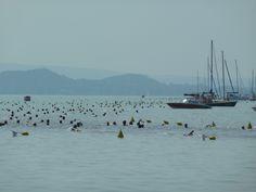 Zwemmers in actie tijdens het jaarlijkse overzwemmen van het #Balatonmeer vanaf Revfulop: www.vakantiehuis-balaton.nl