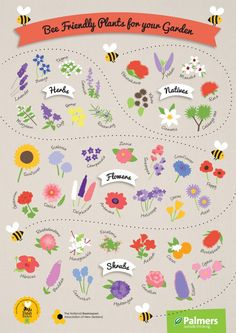 Bee Friendly Plants A3 Poster