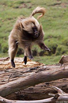 idk baboon