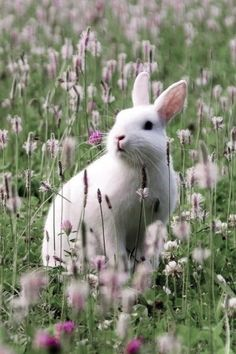 ♥ Bunny in a field of pink flowers