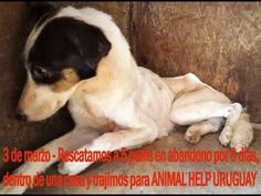 2 de marzo'16 rescatamos 5 perris más en estado lamentable y trajimos a ...