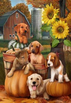 Harvest, Puppies, Pumpkins