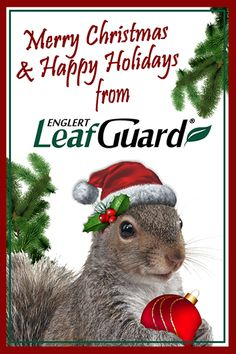 67 Best Squirrel Memes Images In 2018 Squirrel Memes