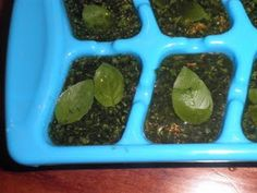 Chopped basil in ice cube trays. Throw them into soup or sauce or dips anytime.