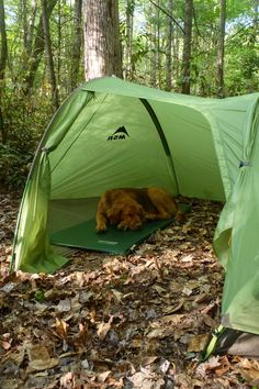 Tips for hiking with dogs (and backpacking too) - Rock/Creek Chronicle