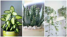 Plante pe care nu le poti omori. De incercat inainte sa renuntati