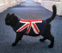 オシャレすぎる英国政府機関配属の猫達wwwwwww