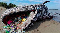 Por primera vez una ballena no fue encontrada muerta en las playas de Filipinas por ingerir desechos tóxicos. Se trata de una escultura de plástico cr...