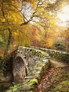 Medieval Bridge, Tollymore Forest, Ireland ~ Photo by Gary Mcparland.
