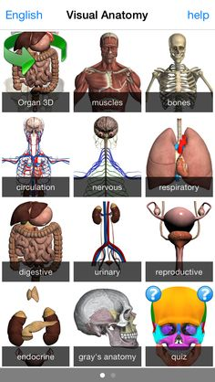 Best Study and Productivity Apps for Human Physiology and Anatomy Students - Health Works Collective Anatomy App, Grey's Anatomy Quiz, Human Anatomy, Lpn Nursing, Nursing Tips, Health And Physical Education, Science Education, Muscle Names, Best Mobile Apps
