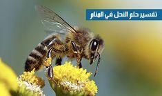 تفسير رؤية النحلة في المنام Insects, Bee, Animals, Honey Bees, Animales, Animaux, Bees, Animal, Animais