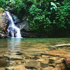 Tobago's beauty is abundant. Check out this gorgeous image of a Waterfall in Castara!   Image Credit: destinationxploration.com  #Tobago #Trinidad #TrinidadAndTobago #Caribbean #Island #Beach #CastaraTobago #Castara #TobagoBookings #PhotoOfTheDay #POTD #PictureOfTheDay #Waterfall