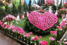 Hermosas flores!