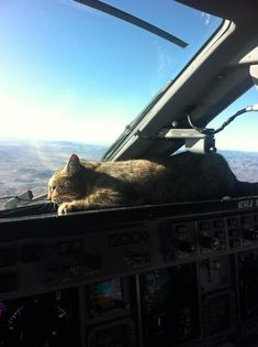 Pilot: Mouse in cockpit  Maintenance: Cat installed