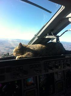 Pilot: Mouse in cockpit  Maintenance: Cat installed