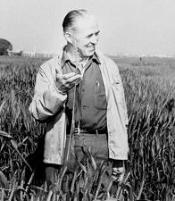 Norman Borlaug in one of his field's in Mexico. Saved a billion lives.