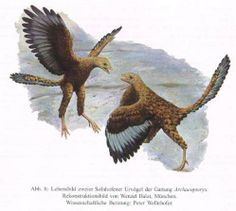 Archaeopteryx | ... Archaeopteryx lithographica(MEYER) und Archaeopteryx bavarica