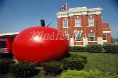 giant tomato
