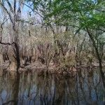 Iamonia Lake in Calhoun County, Florida.