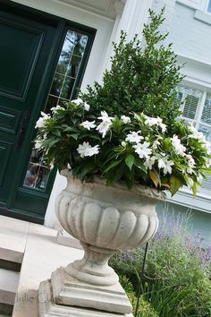 Beautiful urn with boxwood and impatiens at front door of a house. Can use the new 'Sunpatiens'.