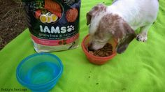 #ad My dog loves the IAMS Grain Free Naturals dog food! She dug in right away and ate up her food fast. Has your dog tried any of the IAMS Proactive Health, Healthy Naturals, Grain Free or Premium Protection products yet? If so, did they like them? #FurryFoodie