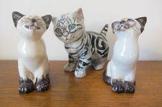 Seneshall Kittens