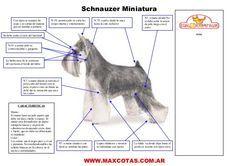 pasos corte de pelo schnauzer - Buscar con Google