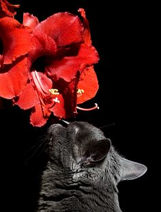 Smells the flower
