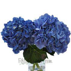 #flowers FiftyFlowers.com - Hydrangea Dark Blue Flower