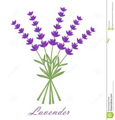 Lavender Stock Images - Image: 26101644