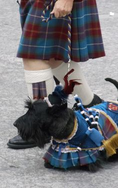 scottie dog -