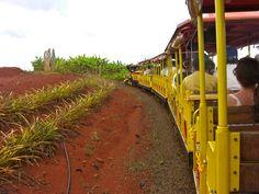 Dole Plantation, Hawaii narrated train tour through pineapple and coffee fields, plus banana trees (island of Oahu)