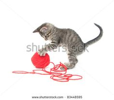 Kitten Yarn Stock Photos, Images, & Pictures | Shutterstock