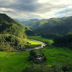 Look at that sunlight rippling on the rice terraces in #Ifugao Province, located in the Philippine Cordilleras. These terraces are the product of the Ifugao ethnic group, a community that has occupied the mountains for almost 2,000 years.
