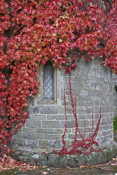 Virginia Creeper Detail, Clock Arch, Stourhead by Peter Cook UK, via Flickr