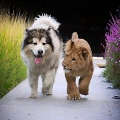 Friends, dog and lion cub