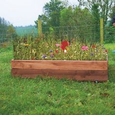 Mini Wildflower Meadow Box
