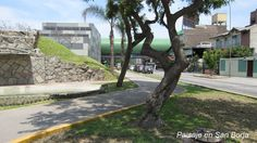 Paisaje en San Borja, Lima - Perú.