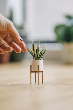 Paper Artist Creates Handmade Plant Sculptures That Fit on Your Fingers – Miif Plus Diy Dollhouse, Dollhouse Miniatures, Dollhouse Miniature Tutorials, Doll House Plans, Paper Plants, Barbie Furniture, Furniture Plans, Modern Dollhouse Furniture, Furniture Online