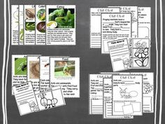 INSECTS NONFICTION CHIT CHAT MESSAGES, CLOSE READING PASSAGES & MORE! Insects Nonfiction fun! This is what happens when Chit Chat Messages & Close Reading Collide! (View Preview) This resource is perfect to use for Shared Reading and Interactive Writing in a K & 1 classroom. This resource can be used with an Insect Animals theme or as a stand alone Reading & Writing lessons and activities. There are four animals represented in this unit. Bumblebees, Butterflies, Praying Mantises and Ants