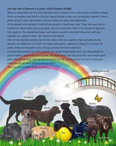 Your pet will wait for you at the Rainbow Bridge... Healthy and Happy long after they have past..
