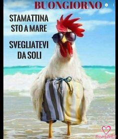 Birth Day QUOTATION – Image : Quotes about Birthday – Description Cool chick….en… Sharing is Caring – Hey can you Share this Quote ! Chicken Humor, Chicken Art, Chicken Signs, Animals And Pets, Funny Animals, Cute Animals, Evening Greetings, Rooster Art, Sun Holidays