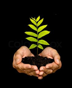 A sprout in palms as a symbol of nature ♥g♥