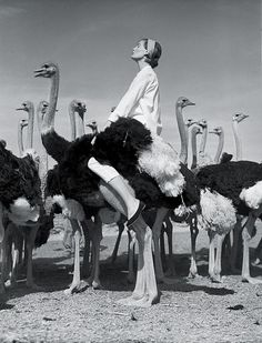 Wenda and the Ostriches, South Africa, Vogue, 1954Photographer: Norman ParkinsonModel: Wenda Parkinson