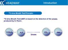 14C-Urea Breath Test Principle: