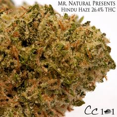 #Hindu #Haze is a hybrid strain crossed between Hindu Kush and Super Silver Haze.  @bobnatural has won multiple Cannabis Cups and is famous for his all-natural high THC/CBD strains. #mrnatural #420 #macro #trichomes